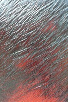 L'Absente, tilleul, pièce unique, 125 cm, 2010
